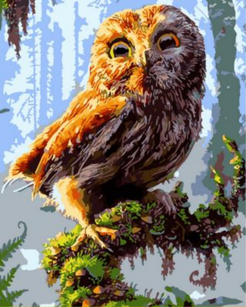 Owl Diy Paint By Numbers Kits ZXQ1434