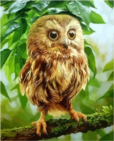 Owl Diy Paint By Numbers Kits ZXQ2787