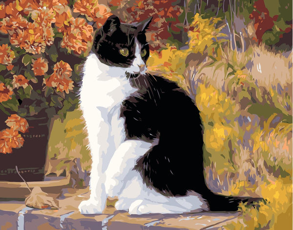 Cat Diy Paint By Numbers Kits SY-4050-025