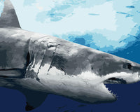 Shark Diy Paint By Numbers Kits WM-1076