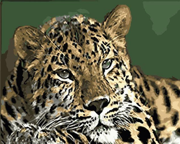 Leopard Diy Paint By Numbers Kits WM-1471