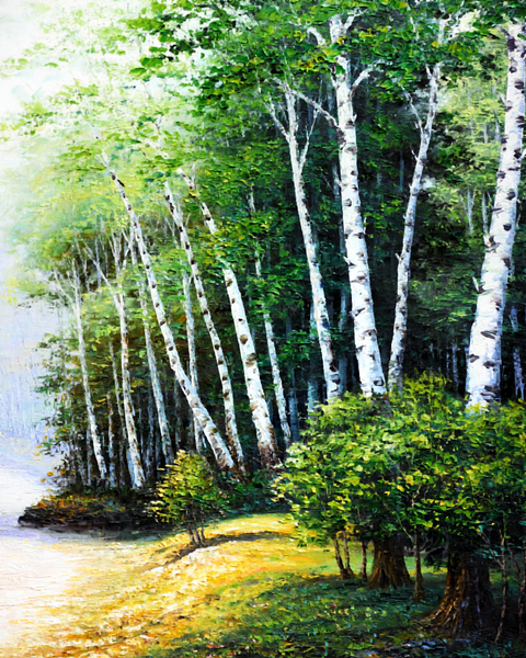 Landscape Forest Diy Paint By Numbers WM-252