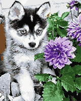 Flower Dog Diy Paint By Numbers Kits WM-571