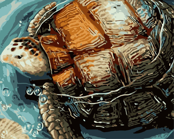 Turtle Diy Paint By Numbers Kits WM-634