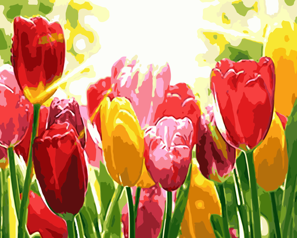 Tulips Diy Paint By Numbers Kits WM-777