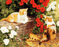Cat Diy Paint By Numbers Kits WM-861