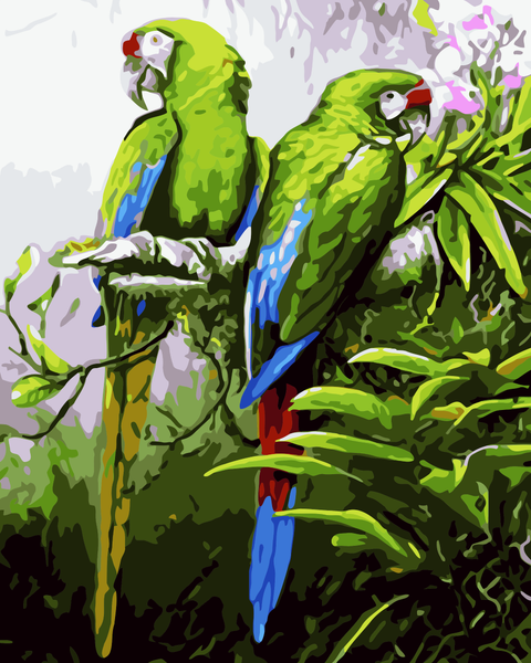 Parrot Diy Paint By Numbers Kits WM-918