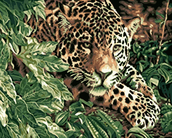 Leopard Diy Paint By Numbers Kits WM-950