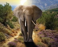 Animal Elephant Diy Paint By Numbers Kits ZXQ3539