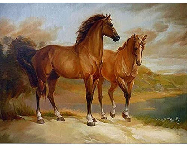Horse Diy Paint By Numbers Kits PBN94552