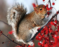 Squirrel Diy Paint by Numbers Kits DIY PBN96429