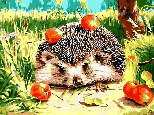 Hedgehog Diy Paint By Numbers Kits ZXQ722