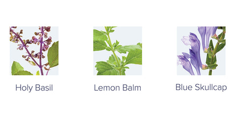 examples of adaptogens: holy basil, lemon balm, blue skullcap