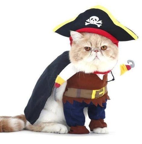 Chat Costume Pirate