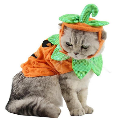 Costume Citrouille Chat