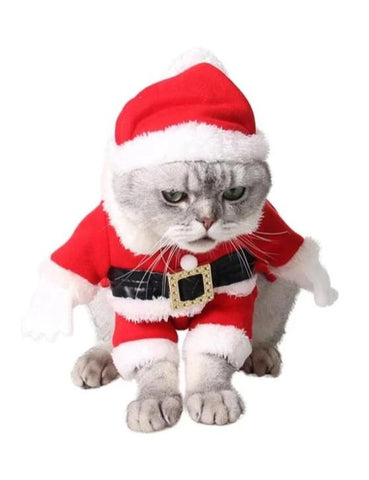 Chat Costume Père Noël