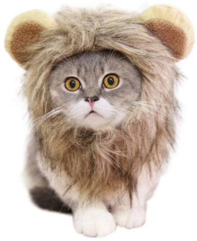 Costume Chat Lion