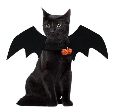 Costume pour Chat Halloween