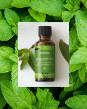 Load image into Gallery viewer, peppermint essential oil + base