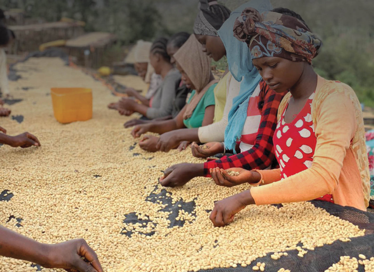 your favorite ethiopian coffee