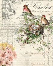 "Load image into Gallery viewer, Bird Ephemera 20"" x 30"" Roycycled Treasures Decoupage Tissue Papers -"