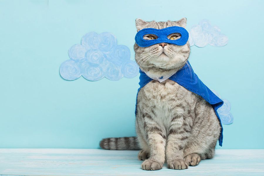 Your Pet A Superhero
