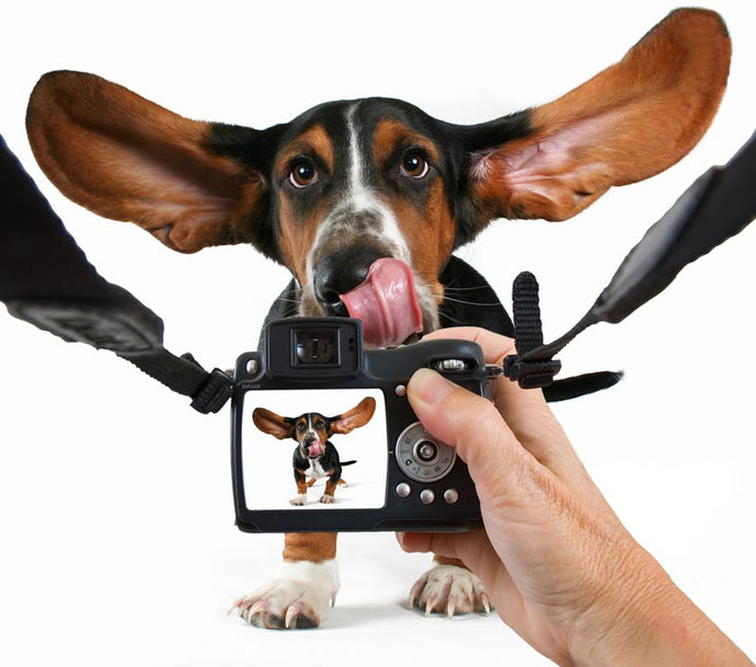 Top tips on how to photograph your pets.