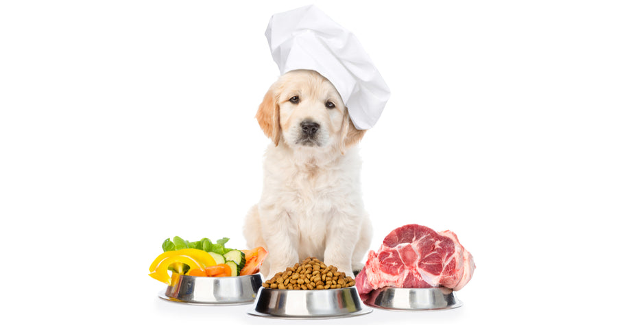 Getting to Know the Healthiest Foods for Your Dog