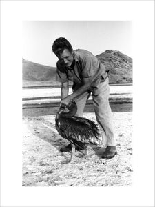 John Newbould with a pelican