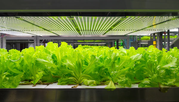 How a Hydroponic System Can Reduce Your Carbon Footprint