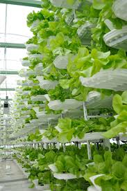 Sustainable Solutions for Global Food Shortages: Eco-friendly Benefits of Hydroponics
