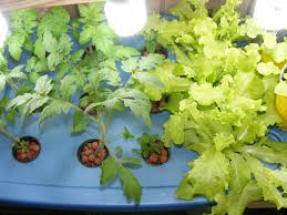Your Hydroponics Equipment Supplier Has Everything You Need for Indoor Gardening Success