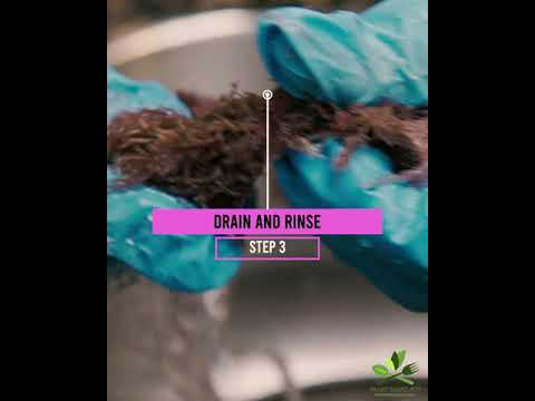 Load and play video in Gallery viewer, Purple Dry Sea Moss (2 Months) and Capsule Bundle