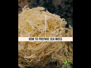 Load and play video in Gallery viewer, Premium Gold Dry Sea Moss (2 Months) and Capsule Bundle