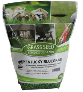 1kg Kentucky Bluegrass Grass Seed