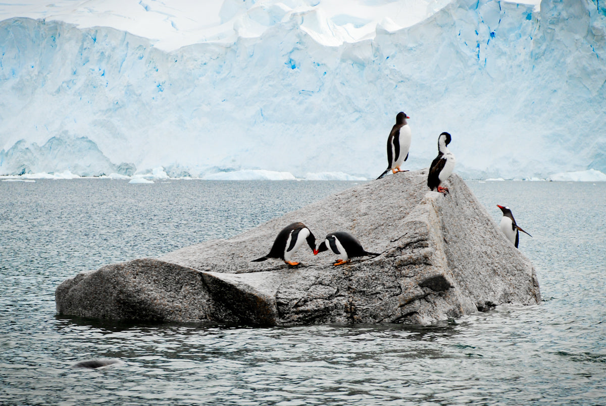 Love in Antarctica