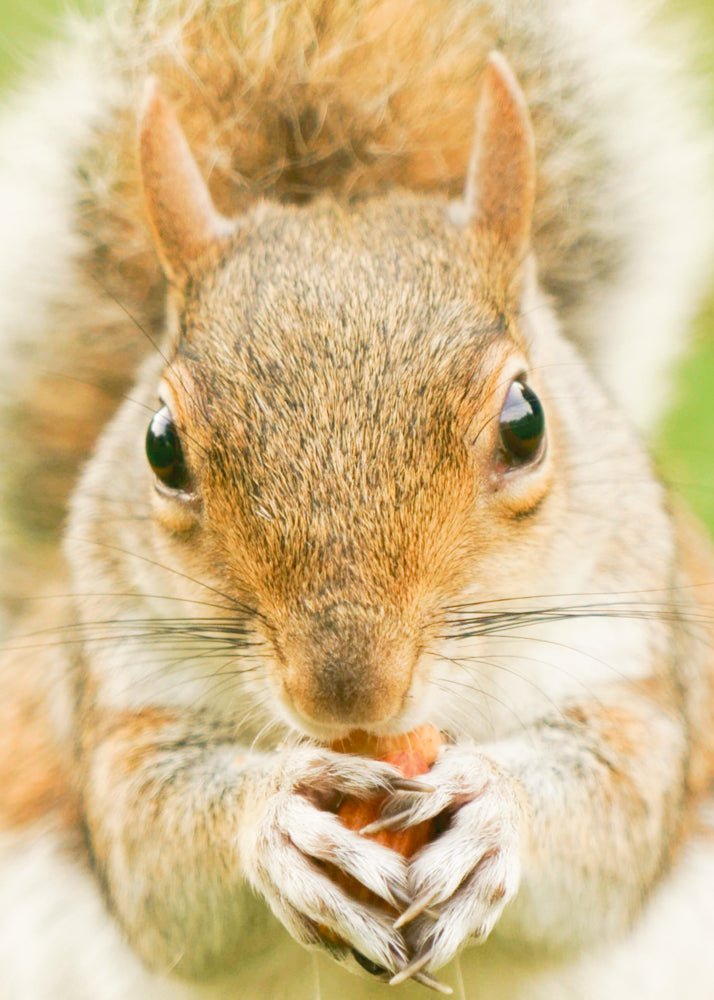 Squirrel up close