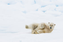 Load image into Gallery viewer, Polar bear slide