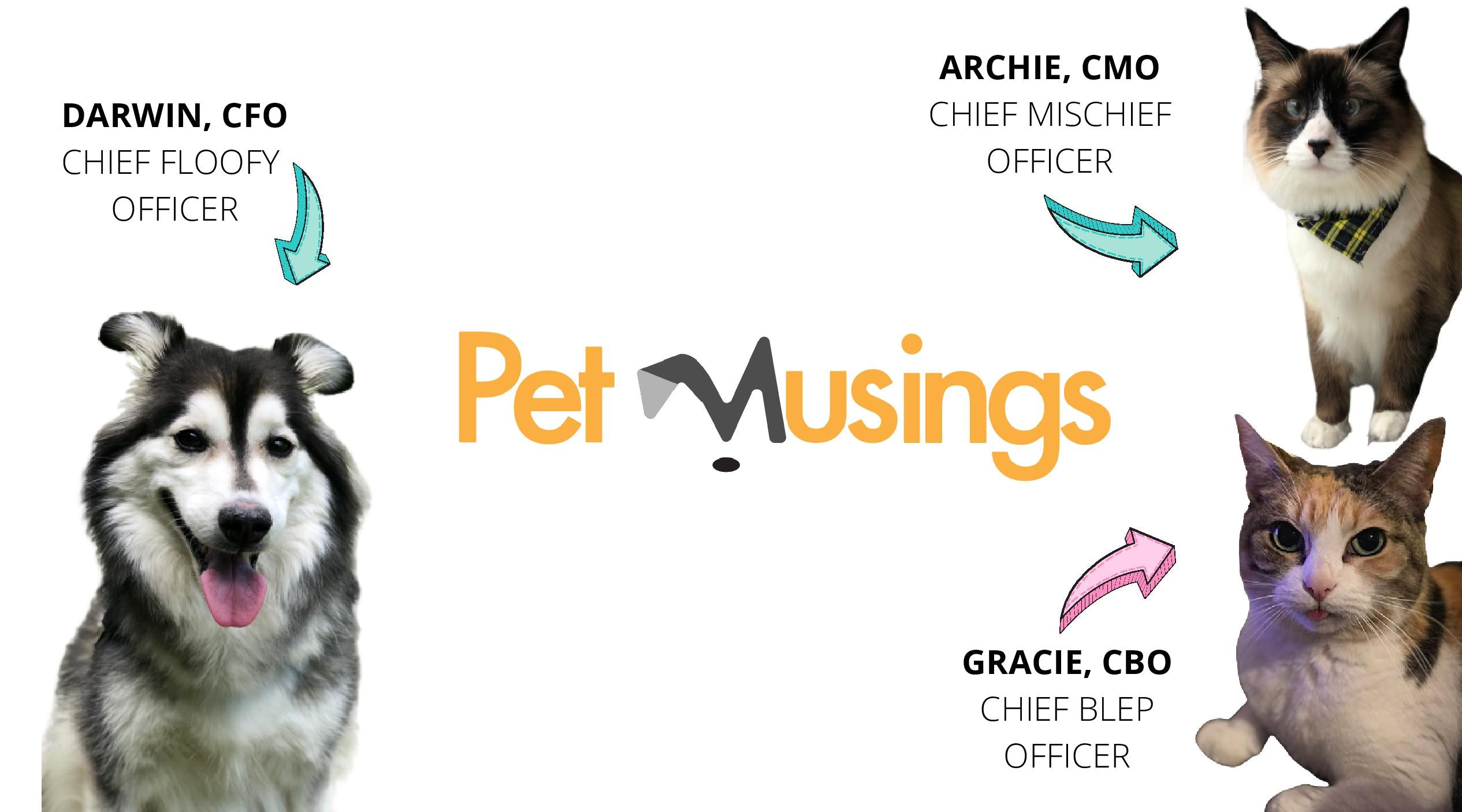 Pet Musings team photo with one dog, Darwin, and two cats, Archie and Gracie