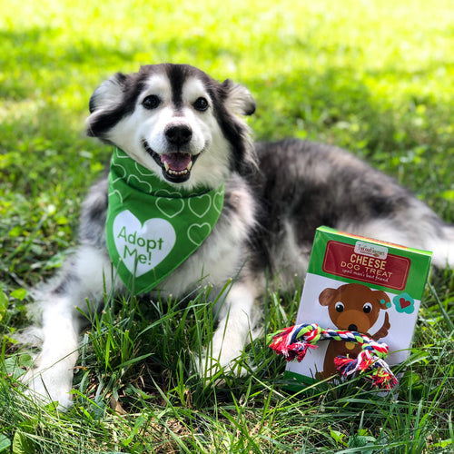 Shelter Dog Care Package - Pet Musings