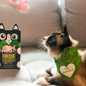 Shelter Cat Care Package - Pet Musings