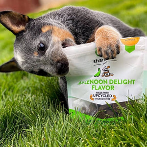 Applenoon Delight Soft Baked Dog Treats - Pet Musings
