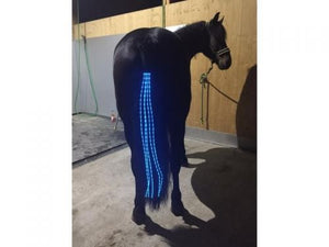 LED Horse Tail Lights