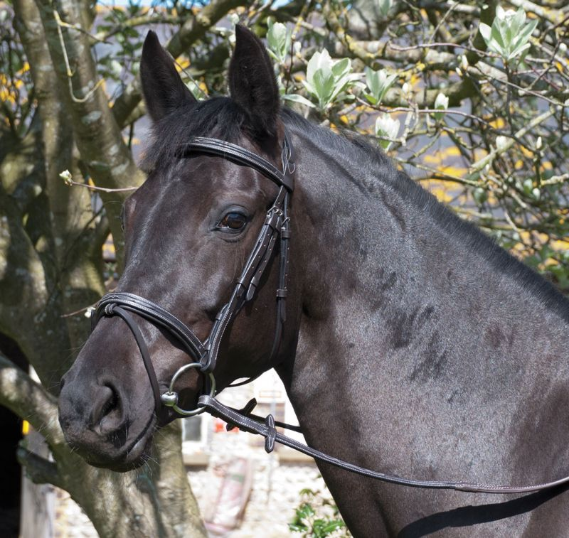Rhinegold 'Elegance' German Leather Bridle With Flash Noseband