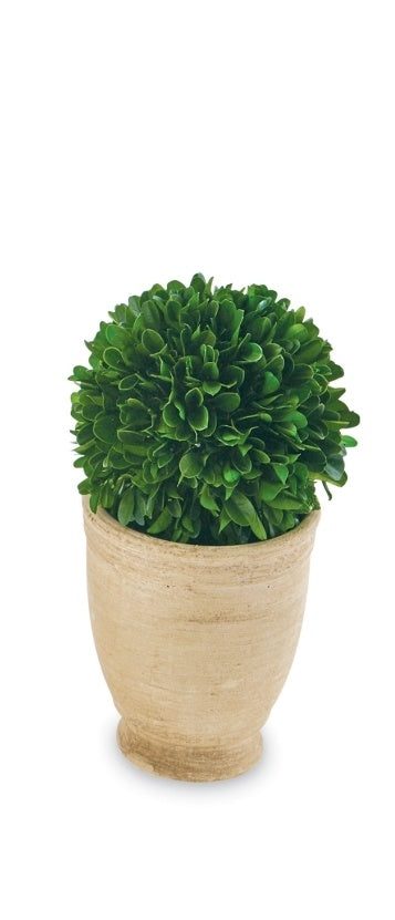 Large Boxwood, Round