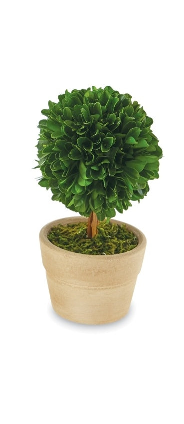 Small Boxwood, Stem