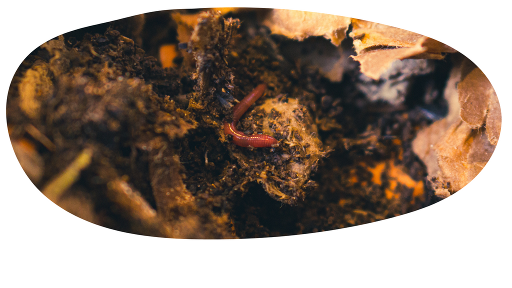 About Composting Worms