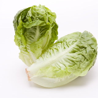 Little Gem Lettuce Twin Pack