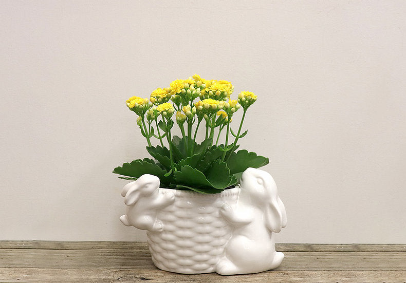 Bunny Pot with Assorted Tropical Plant