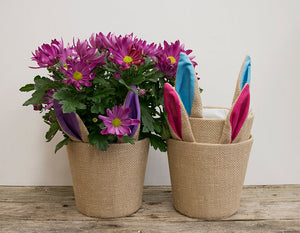 Burlap Bunny Ears Potted Mums - 6""